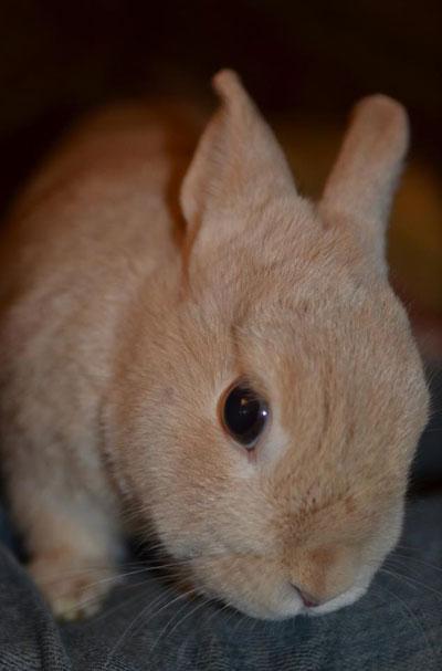 madame bunny, photo by Jenny MacBeth