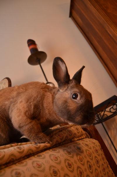 mr. rabbit, photo by Jenny MacBeth